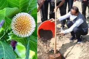 जन्म-दिन के अवसर पर लगाएं पौधे, मुख्यमंत्री ने लगाया आज कदम का पौधा